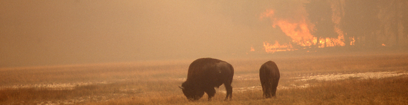 Fighting Fires – Yellowstone National Park 1988